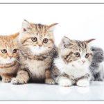 猫の抜け毛対策!ブラッシングやお風呂とシャンプーがオススメ?