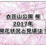 衣笠山公園の桜の2017年の開花状況と見頃は?桜祭りの期間は?