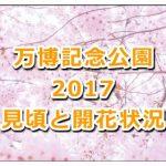 万博記念公園の桜の2017年の開花状況と見頃は?ライトアップも紹介