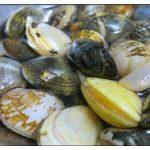 潮干狩りの貝の砂抜きと保存の方法!冷凍庫や冷蔵庫でもつ期間は?