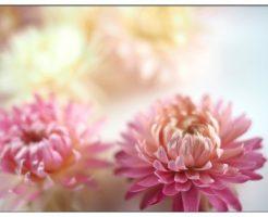花 保存方法
