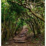 トトロの森の埼玉県所沢市までのアクセスと周辺の駐車場を紹介